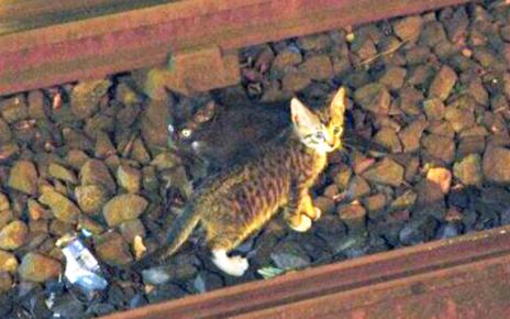 Begini Cara Temukan Kucing yang Hilang Versi Orang Jepang