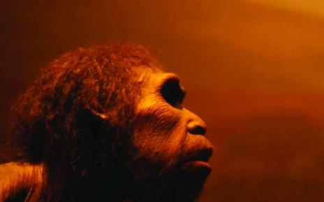 Sejarah Manusia Purba di Indonesia