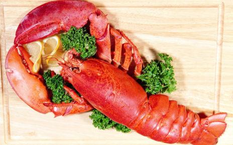 Manfaat Lobster bagi Kesehatan yang Perlu