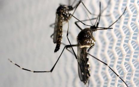 Cara Ampuh Turunkan Kasus DBD Bakteri dalam serangga