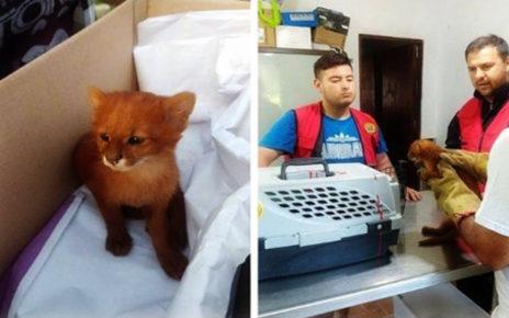 Dikira Kucing Lucu dengan Warna Langka, Cowok Ini Ternyata