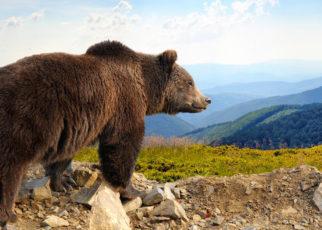 Seekor Beruang Cokelat Italia dijatuhi Hukuman Mati