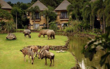 Tempat diBali Ini Tawarkan Nuansa Afrika Nama Bali Safari