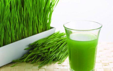 Konsumsilah Wheatgrass dan Dapatkan Sejuta Manfaatnya