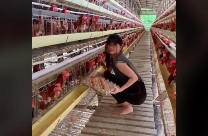 Peternak Ayam Cantik Viral Karena Mirip Kisah di Ftv
