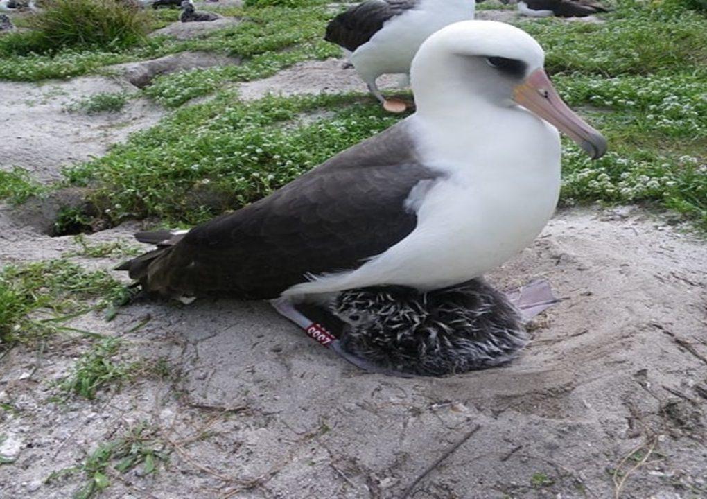 Viral Seekor Burung Berumur 70 Tahun Masih Bisa Bertelur